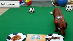پیش بینی یک سگ از نتیجه دیدار افتتاحیه یورو ۲۰۲۱