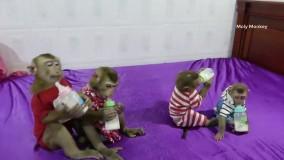 شیر خوردن بچه میمون های بازیگوش