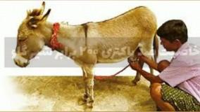 فروش شیر الاغ/شیر تازه الاغ/۰۹۱۲۰۷۵۰۹۳۲/خرید شیر تازه الاغ