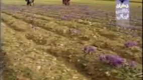 تاریخچه صادرات زعفران ایران در جهان
