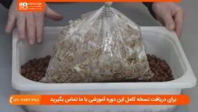 آموزش پرورش قارچ - پرورش قارچ صدفی با استفاده از قهوه