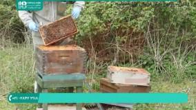 آموزش زنبورداری|نگهداری از کندوی عسل|ساخت کندو عسل(ساختن درب کندوی عسل)