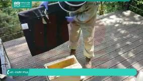 آموزش حرفه ای زنبورداری | پرورش زنبور عسل | جمع آوری دسته و قرار دادن در کندو