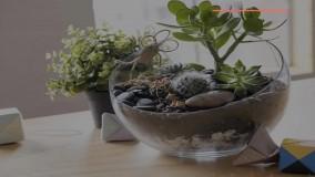 آموزش ساخت تراریوم/چگونه باغچه تراریوم بسازیم