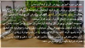 آموزش کاشت گل :: نگهداری گیاه :: قلمه زدن :: نگهداری گل کاغذی مصری