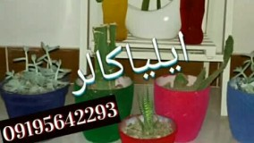 دستگاه  مخمل پاش حرفه ای02156574663