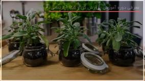 فیلم پرورش گل و گیاه | کاشت گل | گیاهان زینتی (قلمه زدن Bromeliad Guzmani)