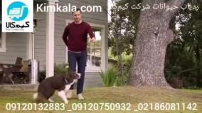 خرید ردیاب حیوانات/۰۹۱۲۰۷۵۰۹۳۲/ردیاب قلاده ای