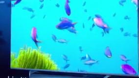 تلویزیون شیائومی ۷۵Q1