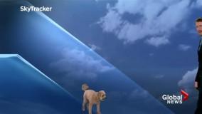 لحظه ورود سگ به استودیوی گزارش هواشناسی !